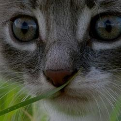 Bentonite in production of cat litters