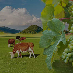 Bentonite in agricultural sector and winemaking